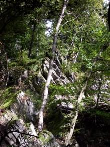 Lebensraum Felsen